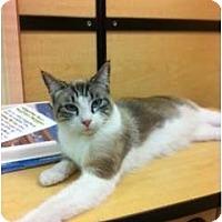 Adopt A Pet :: Java - Modesto, CA