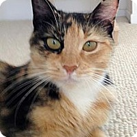 Adopt A Pet :: Cat - Irvine, CA