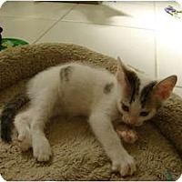 Adopt A Pet :: Ace - Coral Springs, FL