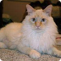 Adopt A Pet :: Zeus - Colorado Springs, CO