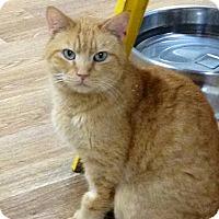 Adopt A Pet :: Elrond - Monroe, GA