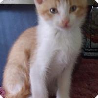 Adopt A Pet :: HADAR - Acme, PA