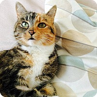 Adopt A Pet :: Talitha - Toronto, ON