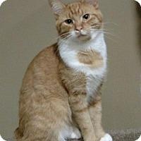 Adopt A Pet :: Kyle - Cincinnati, OH