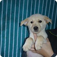 Adopt A Pet :: Peppa - Oviedo, FL