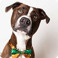 Adopt A Pet :: KONA - Sacramento, CA