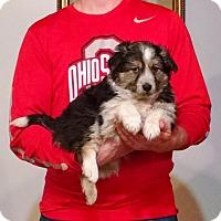 Adopt A Pet :: Reilly - South Euclid, OH