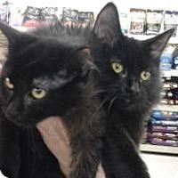 Adopt A Pet :: Nina - Bear, DE