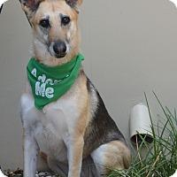 Adopt A Pet :: Anya - Studio City, CA