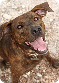 Catahoula Leopard Dog Mix Dog for adoption in McCormick, South Carolina - Finn