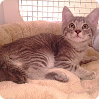 Adopt A Pet :: Sunny - Richmond, VA
