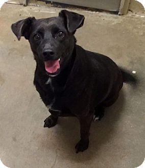 Labrador Retriever Mix Dog for adoption in Uxbridge, Massachusetts - LuLu
