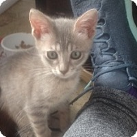 Adopt A Pet :: Simone - San Leandro, CA