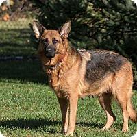 Adopt A Pet :: Zena - Gainesville, VA