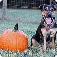 Adopt A Pet :: Sam $125 - Seneca, SC