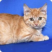 Adopt A Pet :: CATWOMAN - Gloucester, VA