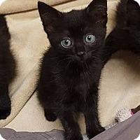 Adopt A Pet :: Alena - Youngsville, NC