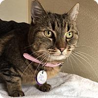 Adopt A Pet :: Millie - North Las Vegas, NV