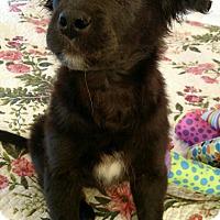 Adopt A Pet :: Cassie - Nashville, TN