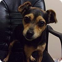 Adopt A Pet :: Sugar Baby - Jamestown, TN