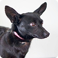 Adopt A Pet :: Diablo - Berkeley, CA