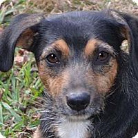Adopt A Pet :: Mama Mona *adopt fee $350 - Allentown, PA