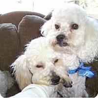 Adopt A Pet :: Calvin and Hobbs - La Costa, CA