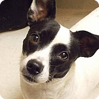 Adopt A Pet :: Tequila in Bay City - Houston, TX