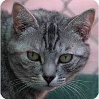 Adopt A Pet :: Tiffany - El Cajon, CA