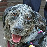 Adopt A Pet :: Banjo Girl - Washington, IL