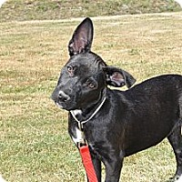 Adopt A Pet :: Britney - Tumwater, WA