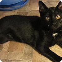 Adopt A Pet :: Clove - Des Moines, IA