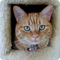 Adopt A Pet :: Reese - Mountain Center, CA