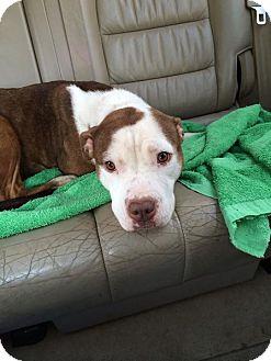 Dog Rescue Park Ridge Nj