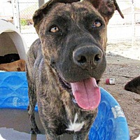 Adopt A Pet :: Sophia - San Tan Valley, AZ