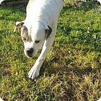 Adopt A Pet :: Fido - Villa Park, IL