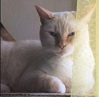purina tidy cats coupon