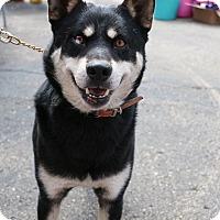 Adopt A Pet :: *AARF* - Steve -Foster Needed! - Detroit, MI