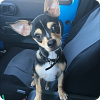 Adopt A Pet :: Mouse - Las Vegas, NV