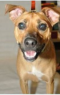 Terrier (Unknown Type, Medium) Mix Dog for adoption in Frisco, Texas - Blossom