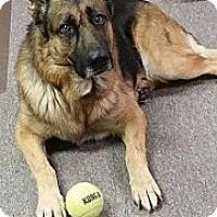 Adopt A Pet :: Justice - Portland, ME