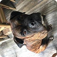 Adopt A Pet :: Ninja - Hurst, TX