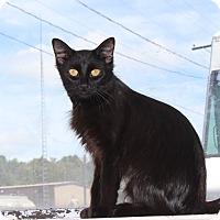 Adopt A Pet :: Luna - Elliot Lake, ON