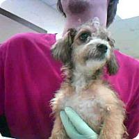 Adopt A Pet :: A275964 - Conroe, TX