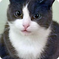 Adopt A Pet :: Hari - Mississauga, Ontario, ON
