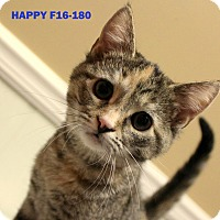 Adopt A Pet :: Happy - Tiffin, OH