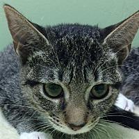 Adopt A Pet :: Demi - Auburn, CA