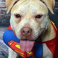 Adopt A Pet :: Reesa - Staten Island, NY