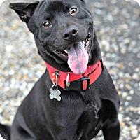 Adopt A Pet :: LUCAS - Linden, NJ