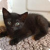 Adopt A Pet :: Lyric - Santa Fe, TX